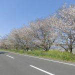 ☆桜~お花見会を開催しました☆